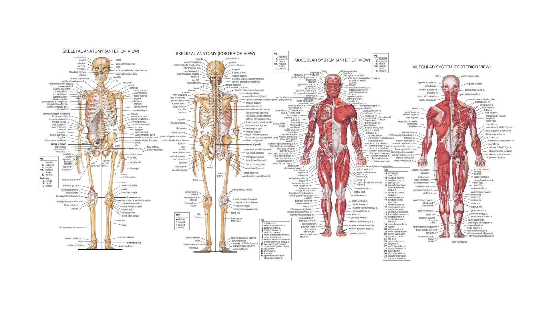 Anatomy hijra body Transgender